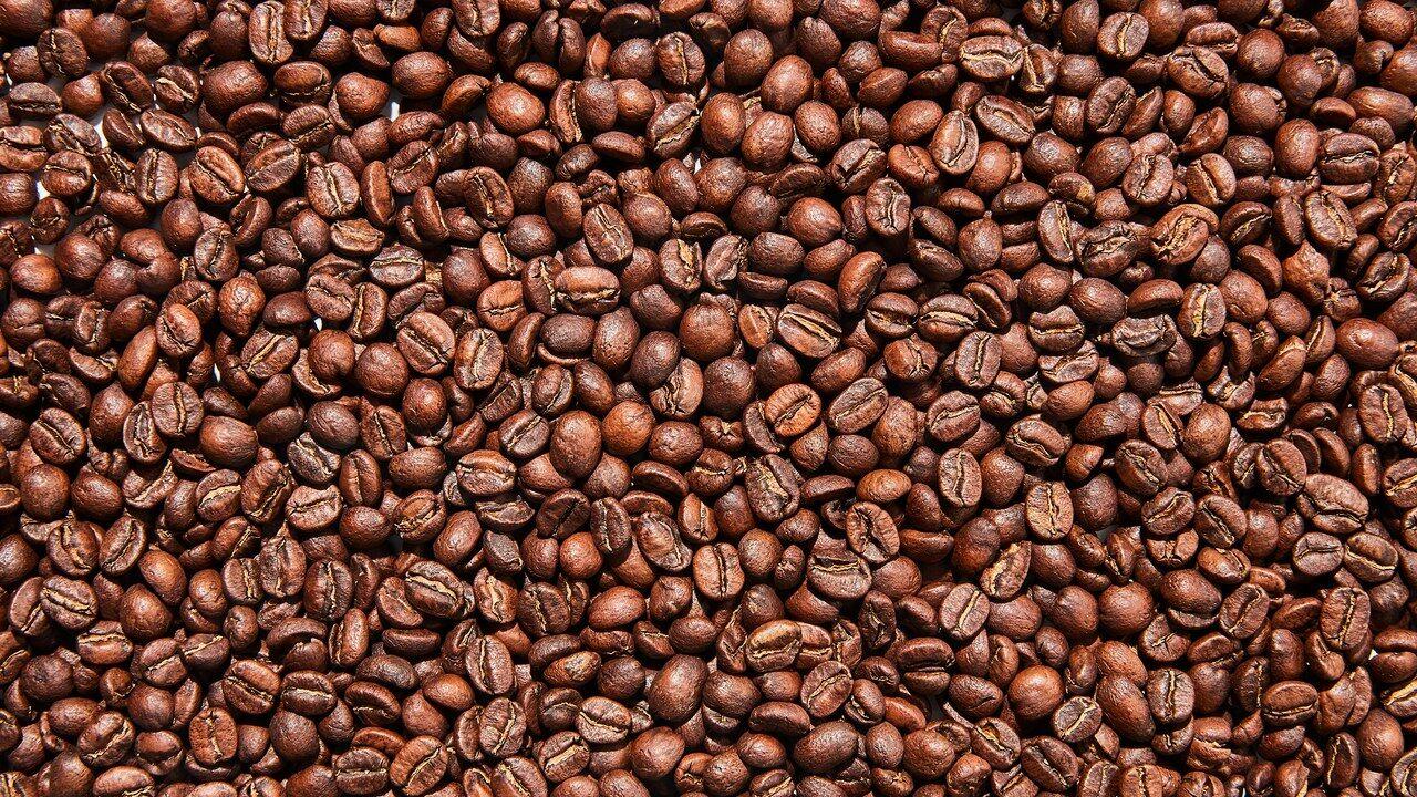 A megszámolt Arabica kávészemek